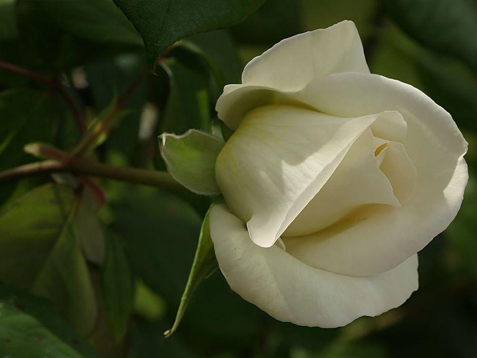 L'Amitié…c'est une fleur dans votre vie… Dans ses yeux…vous sentez qu'elle(il) a tout compris… C'est un ultime sentiment qui vous lie… Une joie incroy