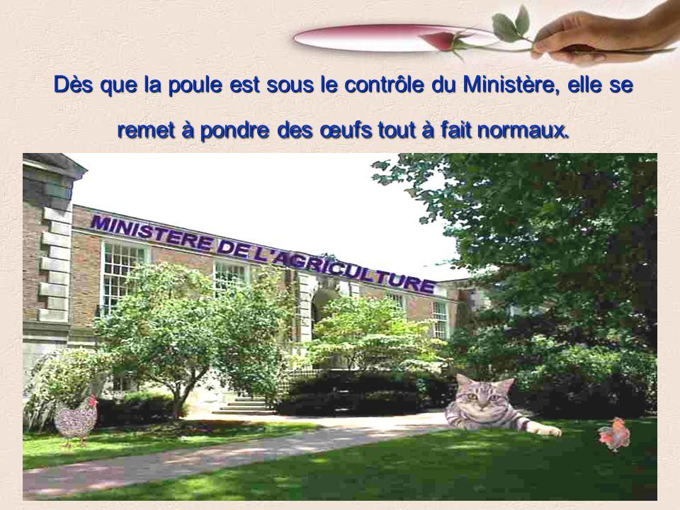 . Le Ministère de l Agriculture, Pêches et Alimentation du Québec propose une jolie somme d argent au fermier pour qu il leur laisse cette poule extraordinaire.