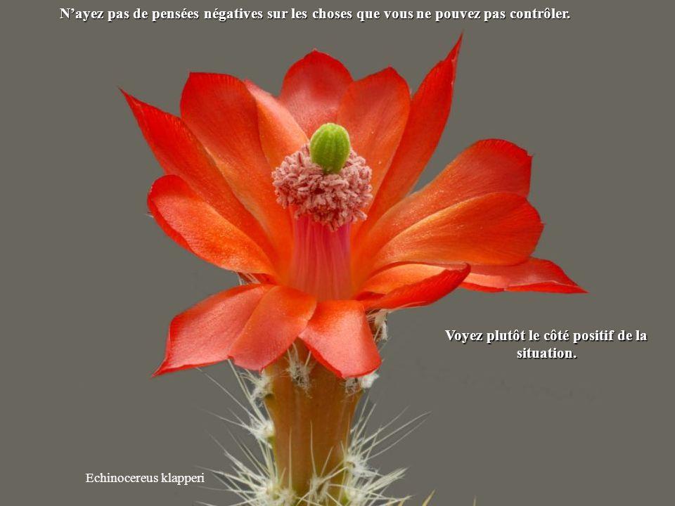 Mammillaria albiflora Ne dépensez pas votre énergie en paroles inutiles.