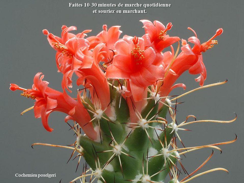 Petites astuces pour une vie meilleure en 2012 Cliquez et admirez les fleurs de cactées.