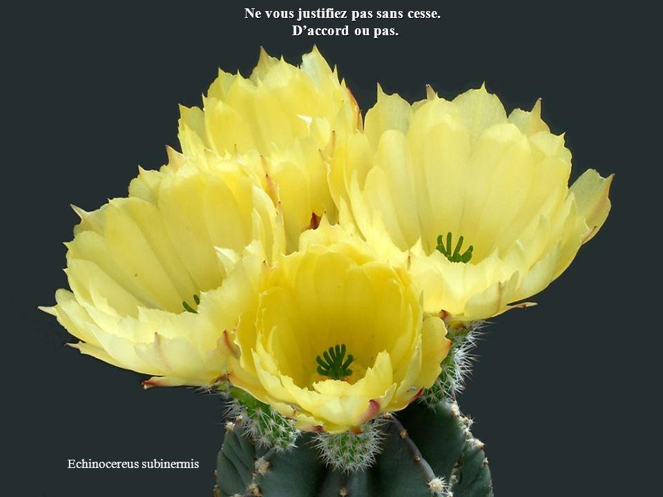Astrophytum coahuilense Sachez que la vie est une école et que vous êtes là pour apprendre.