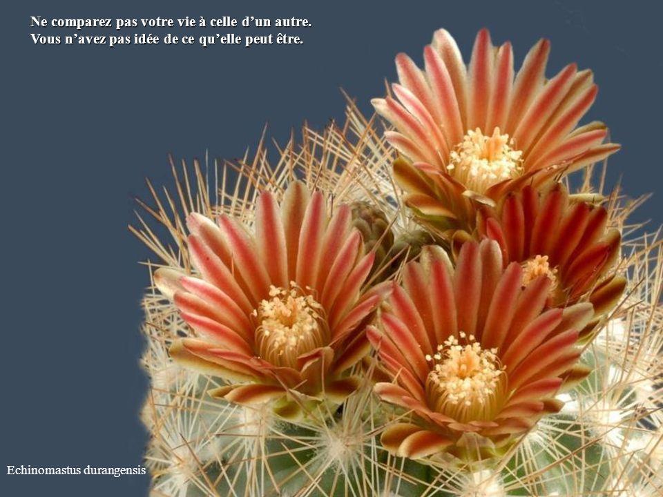 Echinocereus subinermis Ne vous justifiez pas sans cesse. Daccord ou pas. Daccord ou pas.