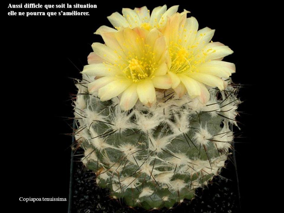 Mammillaria slevinii Peu importe ce que les gens pensent de vous. Ce nest pas votre problème.