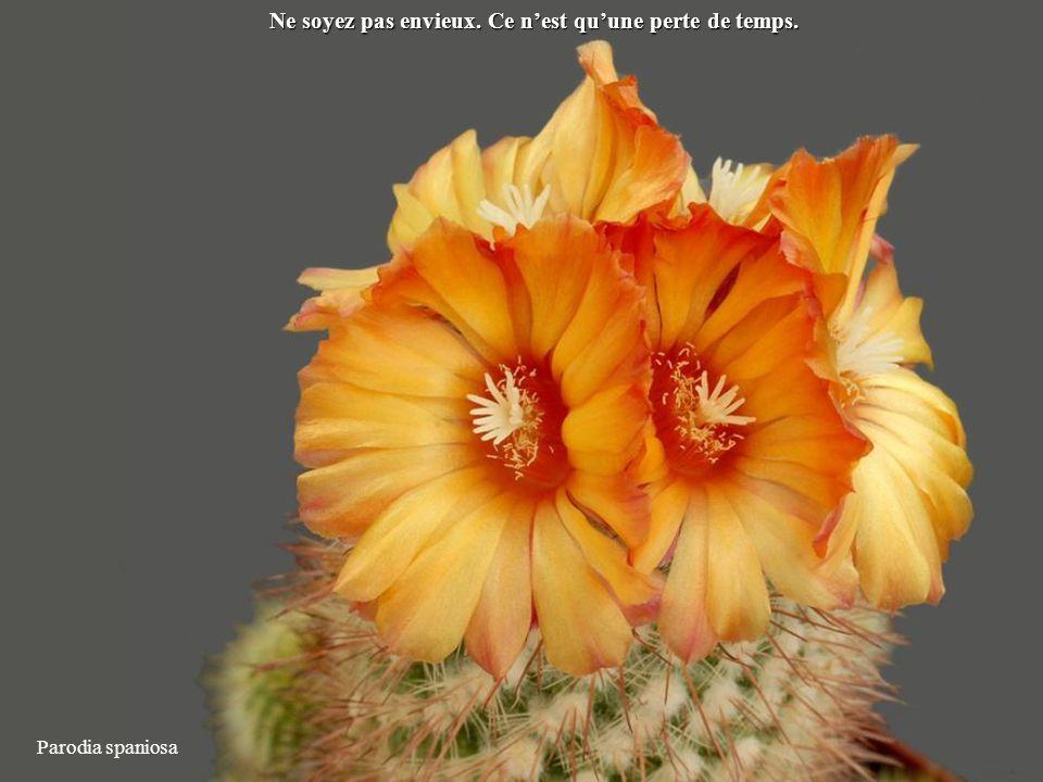 Ortegocactus macdougallii Débarrasez-vous de tout ce qui est inutile pour ne garder que le meilleur.
