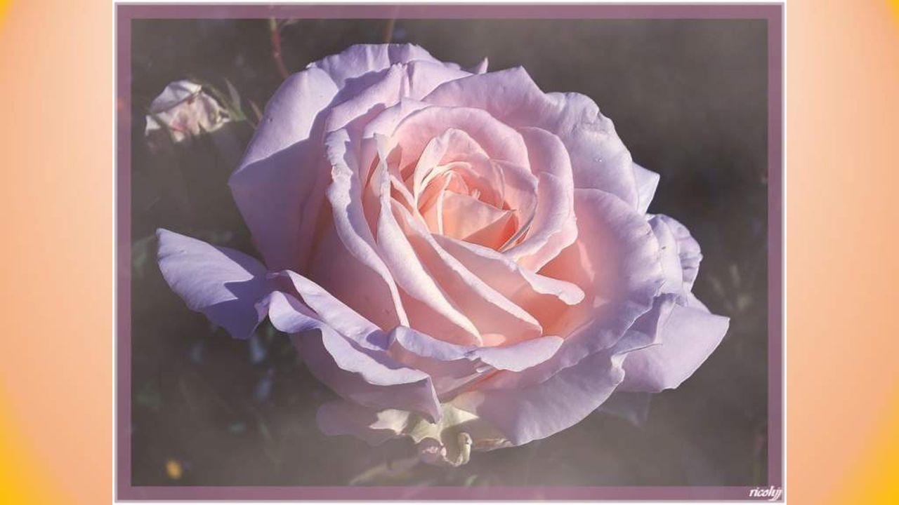 Voir éclore une fleur, revenir les saisons, Avancer vers demain, se rappeler son nom, Penser aux jours heureux, à ceux qui sont partis Sont de riches moments car ils nont pas de prix.