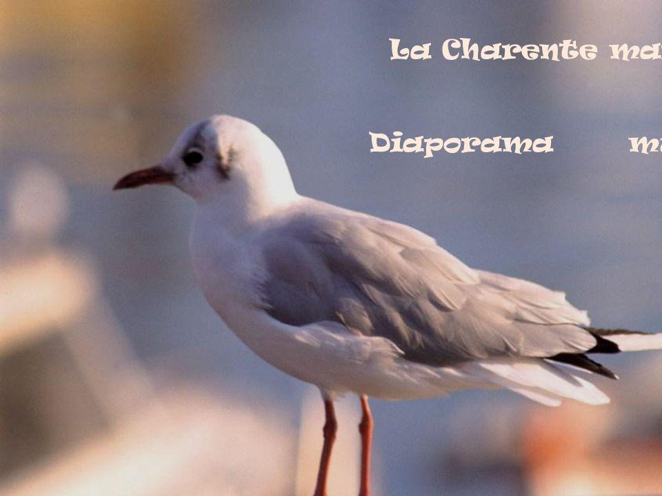 La Charente maritime Vue du ciel par sa mouette ! ! ! Diaporama musical de Filip