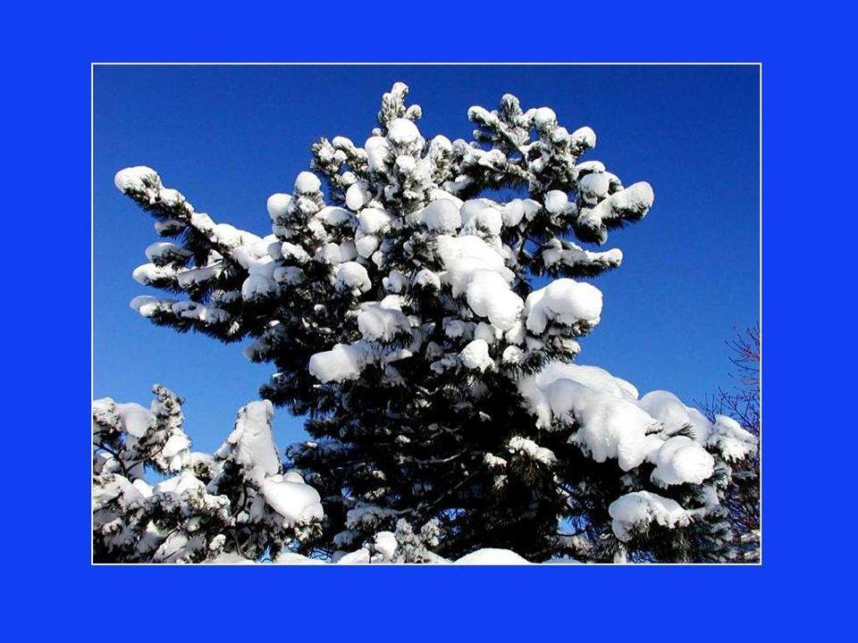 Voltaire, ce coquin de Français la dit: «Pourquoi se battre pour quelques arpents de neige» .