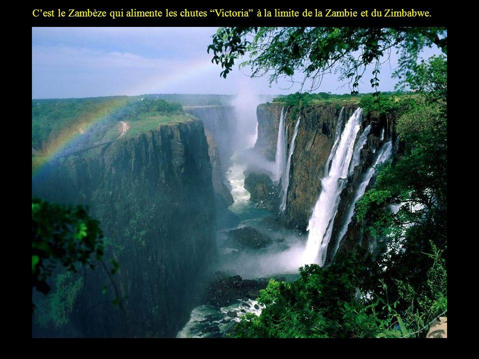 Les Victoria Falls sétendent sur 1.7 km de large et ont une hauteur de 108 m, il sagit donc du plus grand rideau deau au monde