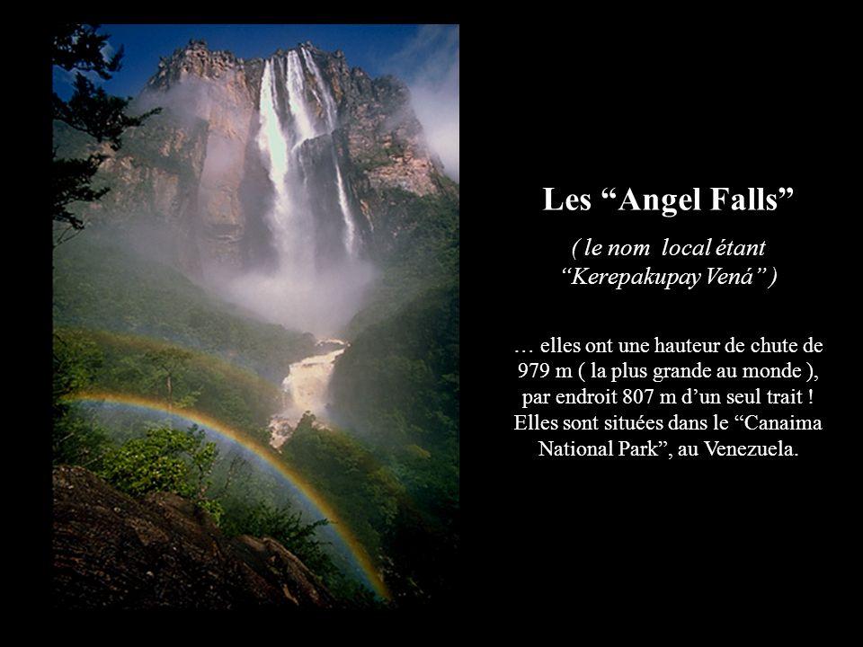 ANGEL FALLS : À votre avis, quelle est la hauteur de ces chutes ? Ces chutes sont 16 fois plus hautes que celles du Niagara : elles ont 979 m de haut