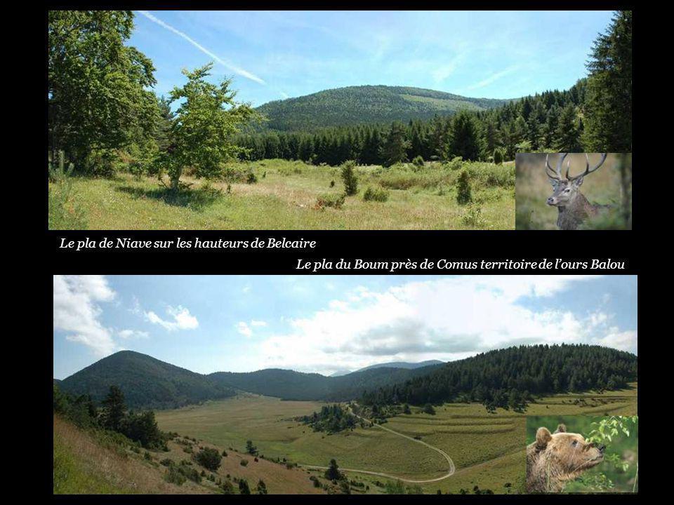 Panorama sur le village de Camurac Le village de Comus territoire de lours Balou