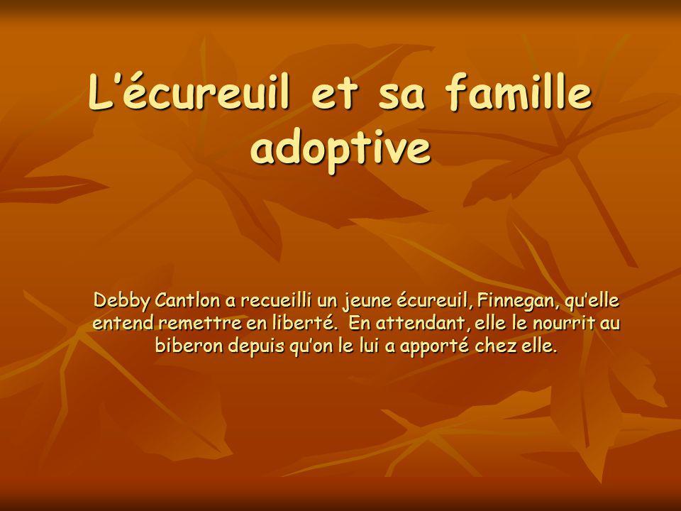 Lécureuil et sa famille adoptive Debby Cantlon a recueilli un jeune écureuil, Finnegan, quelle entend remettre en liberté.