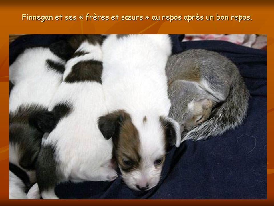 Finnegan et ses nouveaux amis, 5 petits chiens, sentendent à merveille, comme si cétait toujours dans lordre des choses.