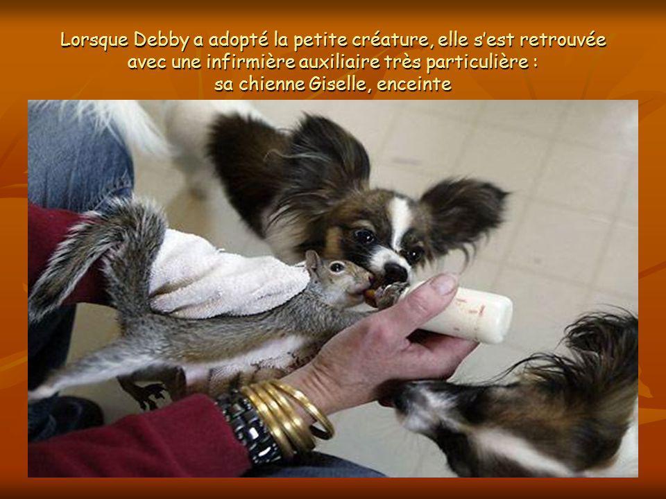 Lécureuil et sa famille adoptive Debby Cantlon a recueilli un jeune écureuil, Finnegan, quelle entend remettre en liberté. En attendant, elle le nourr