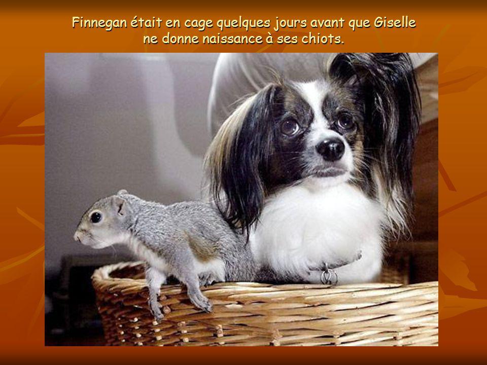 Lorsque Debby a adopté la petite créature, elle sest retrouvée avec une infirmière auxiliaire très particulière : sa chienne Giselle, enceinte