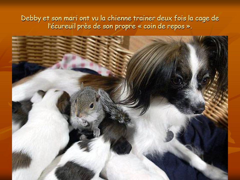 Finnegan était en cage quelques jours avant que Giselle ne donne naissance à ses chiots.
