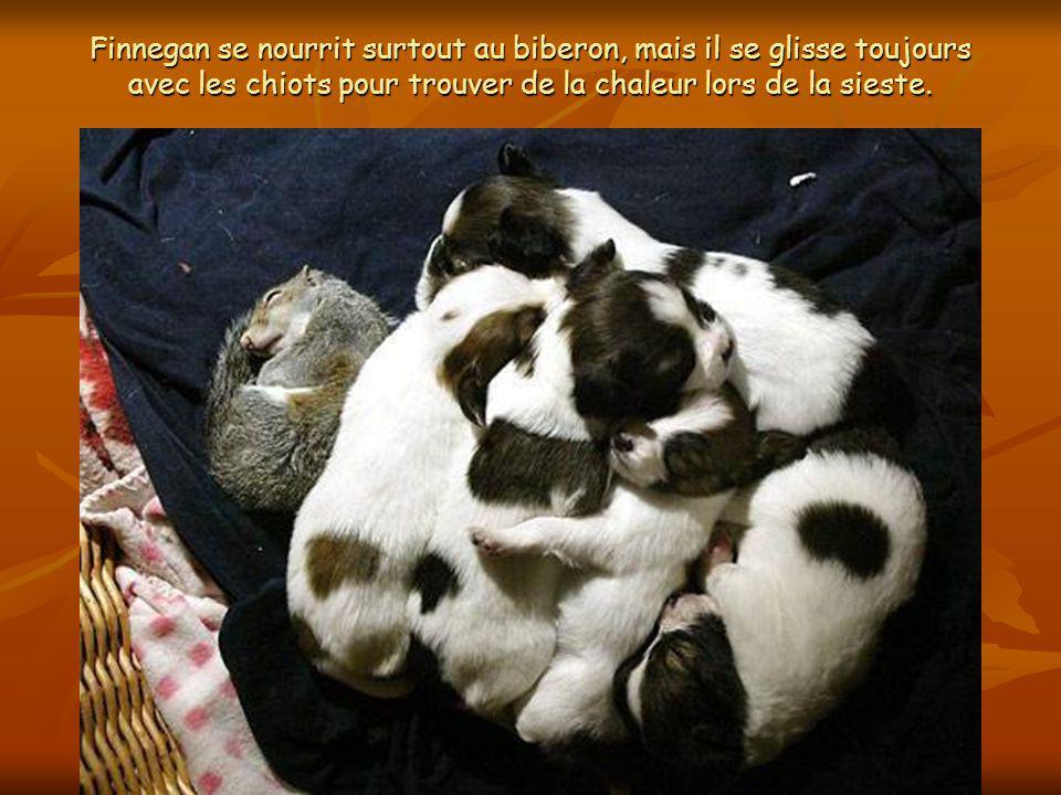 Deux jours après avoir mis bas, Giselle a permis à Finnegan de se nourrir, lencourageant à téter avec ses cinq chiots.