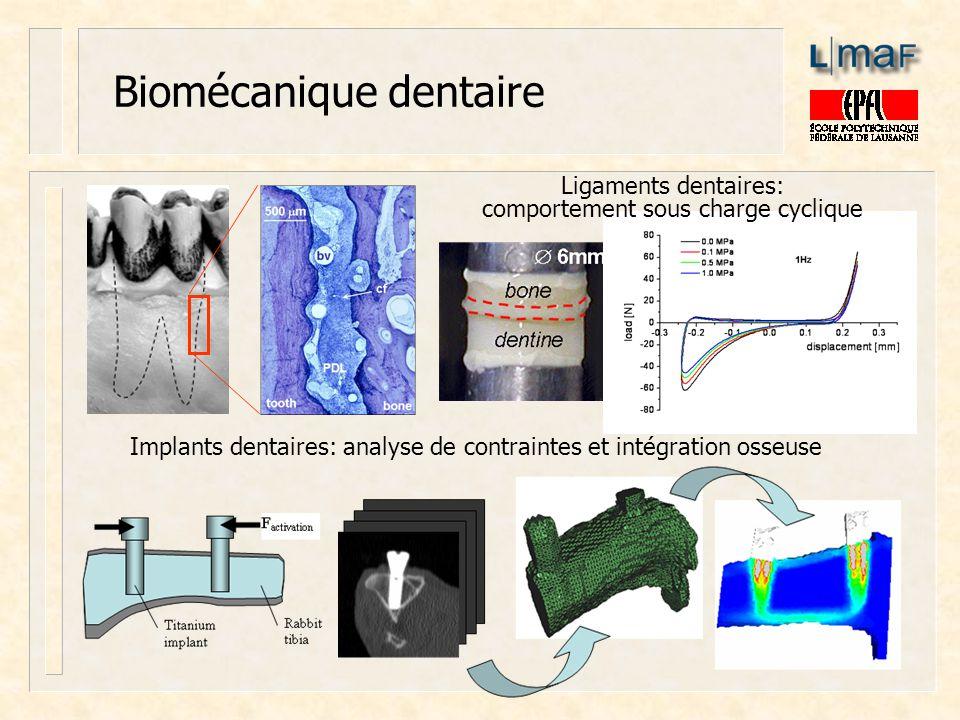 Biomécanique dentaire Implants dentaires: analyse de contraintes et intégration osseuse Ligaments dentaires: comportement sous charge cyclique