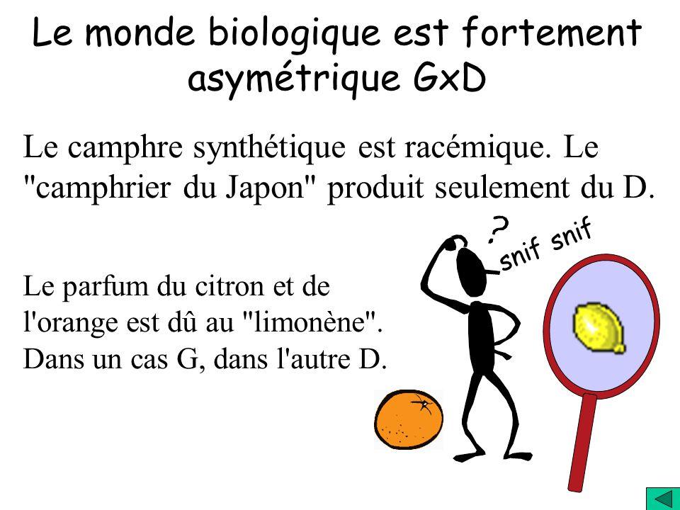 Le monde biologique est fortement asymétrique G D (Nombre de droitiers) (N gauchers) (Nombre de droitiers) (N gauchers) Asymétrie = Exemple: Individus