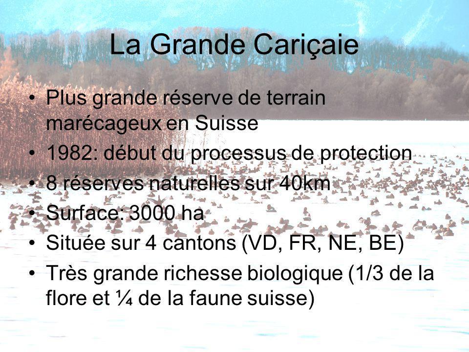 La Grande Cariçaie Plus grande réserve de terrain marécageux en Suisse 1982: début du processus de protection 8 réserves naturelles sur 40km Surface: