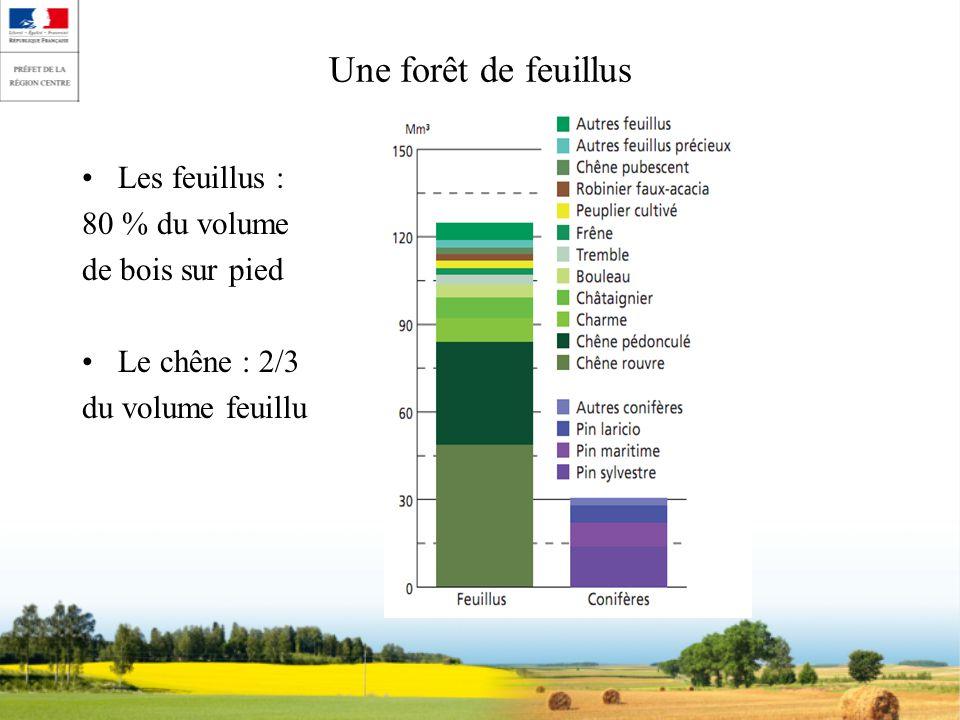 Une forêt de feuillus Les feuillus : 80 % du volume de bois sur pied Le chêne : 2/3 du volume feuillu