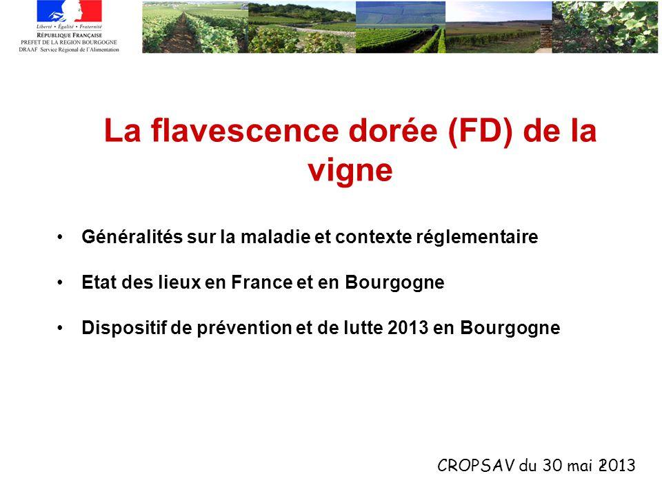 1 La flavescence dorée (FD) de la vigne Généralités sur la maladie et contexte réglementaire Etat des lieux en France et en Bourgogne Dispositif de pr