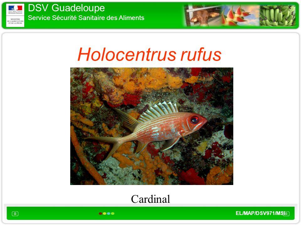 DSV Guadeloupe Service Sécurité Sanitaire des Aliments EL/MAP/DSV971/MSI Holocentrus rufus Cardinal