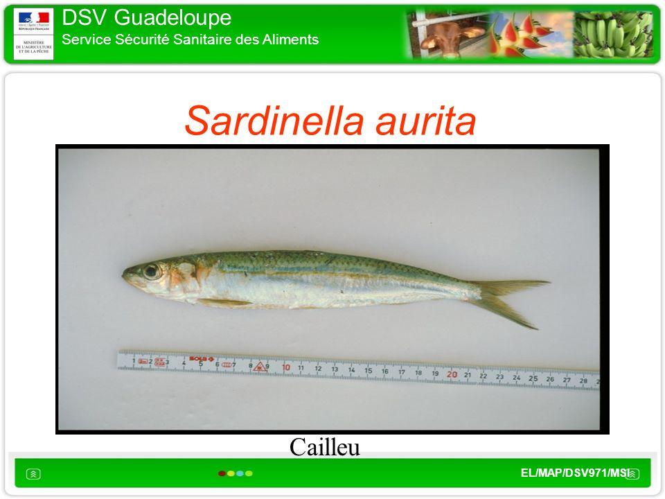 DSV Guadeloupe Service Sécurité Sanitaire des Aliments EL/MAP/DSV971/MSI Sardinella aurita Cailleu