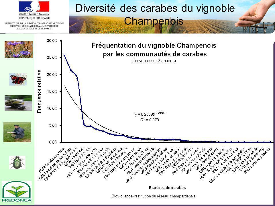 Biovigilance- restitution du réseau champardenais Diversité des carabes du vignoble Champenois