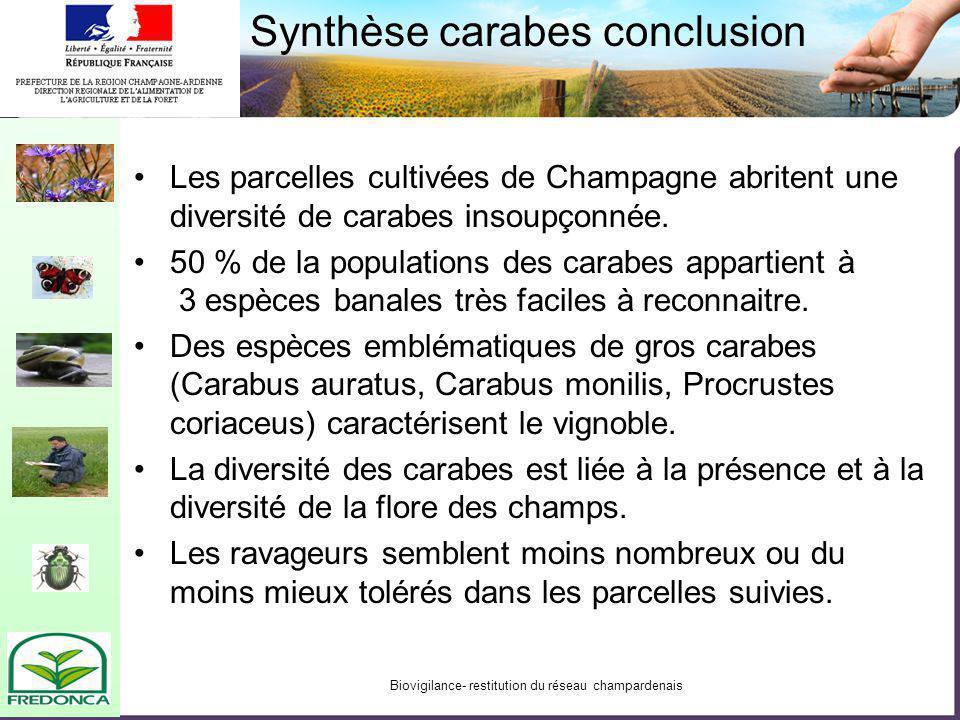 Biovigilance- restitution du réseau champardenais Synthèse carabes conclusion Les parcelles cultivées de Champagne abritent une diversité de carabes i