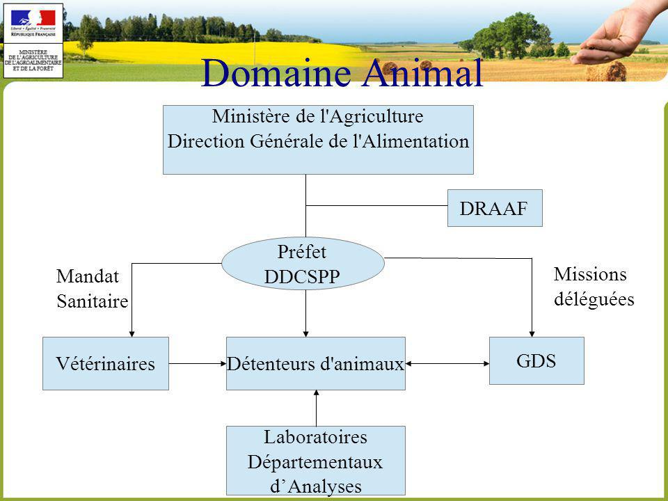 Domaine Animal Ministère de l Agriculture Direction Générale de l Alimentation Préfet DDCSPP DRAAF VétérinairesDétenteurs d animaux GDS Laboratoires Départementaux dAnalyses Mandat Sanitaire Missions déléguées