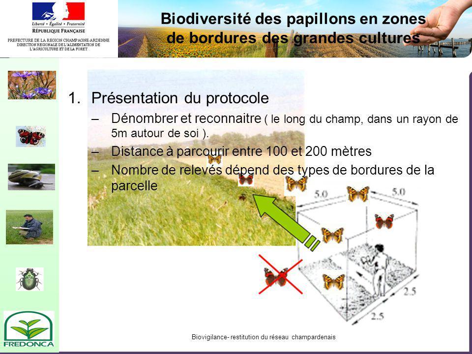 Biovigilance- restitution du réseau champardenais Biodiversité des papillons en zones de bordures des grandes cultures 1.Présentation du protocole –Dénombrer et reconnaitre ( le long du champ, dans un rayon de 5m autour de soi ).