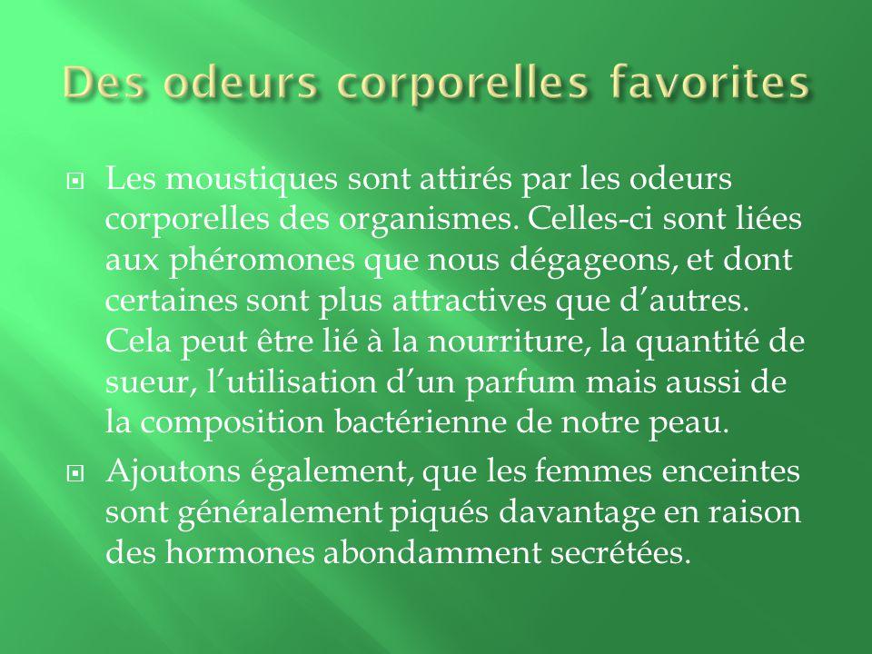 Les moustiques sont attirés par les odeurs corporelles des organismes.