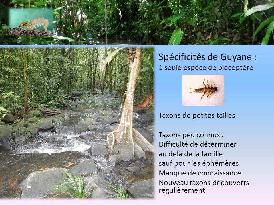 Spécificités de Guyane : 1 seule espèce de plécoptère Taxons de petites tailles Taxons peu connus : Difficulté de déterminer au delà de la famille sauf pour les éphémères Manque de connaissance Nouveau taxons découverts régulièrement