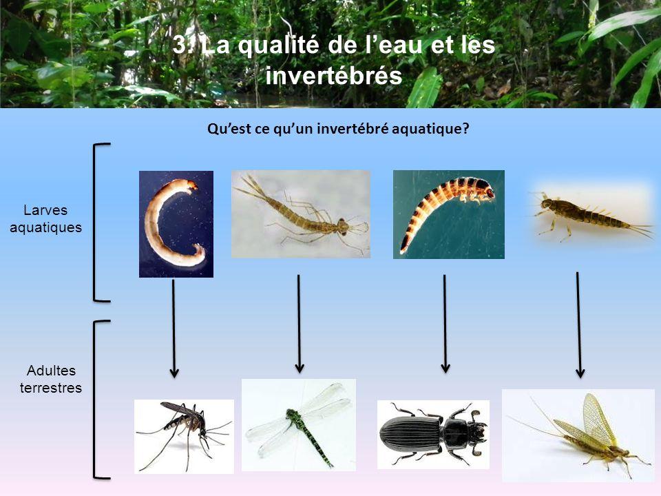 3.La qualité de leau et les invertébrés Quest ce quun invertébré aquatique.