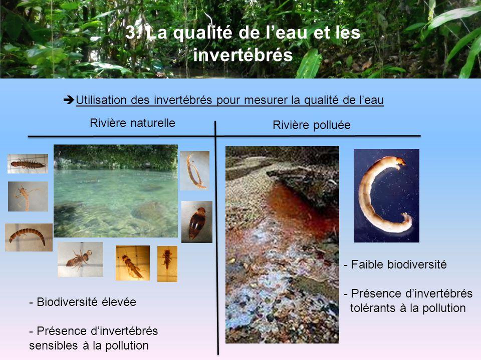 3. La qualité de leau et les invertébrés Utilisation des invertébrés pour mesurer la qualité de leau Rivière naturelle Rivière polluée - Biodiversité