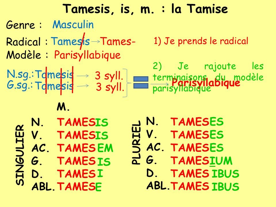 Modèle : Genre : N.sg.: Masculin Tamesis G.sg.: 3 syll. Parisyllabique Radical : TamesisTames- Tamesis, is, m. : la Tamise Tamesis N. V. AC. G. D. ABL
