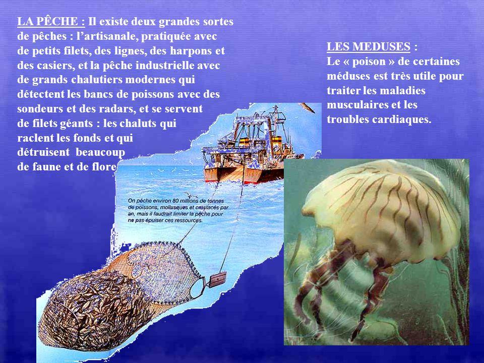LES CORAUX : Nous en avons beaucoup parlé dans le précédent diapo. Avec leurs couleurs vives, leurs formes originales et variées, les coraux sont très