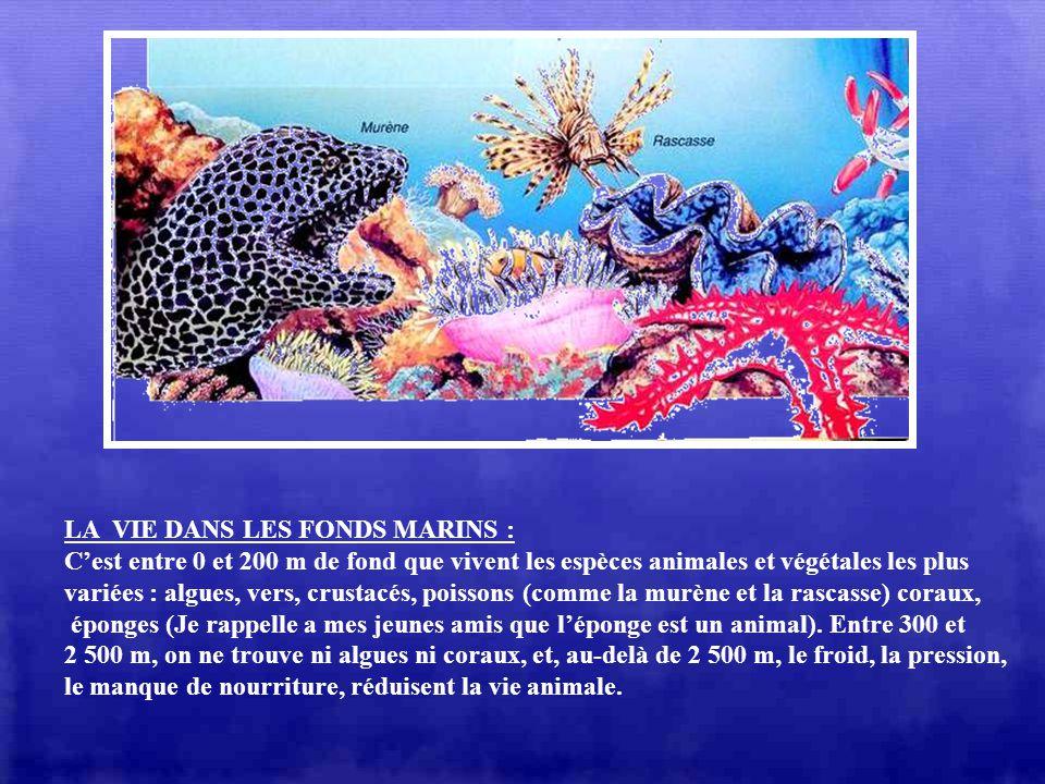 L LES FONDS MARINS : Il existe sous les océans la même diversité de paysages que sur la terre. En effet, grâce à des instruments dobservation modernes