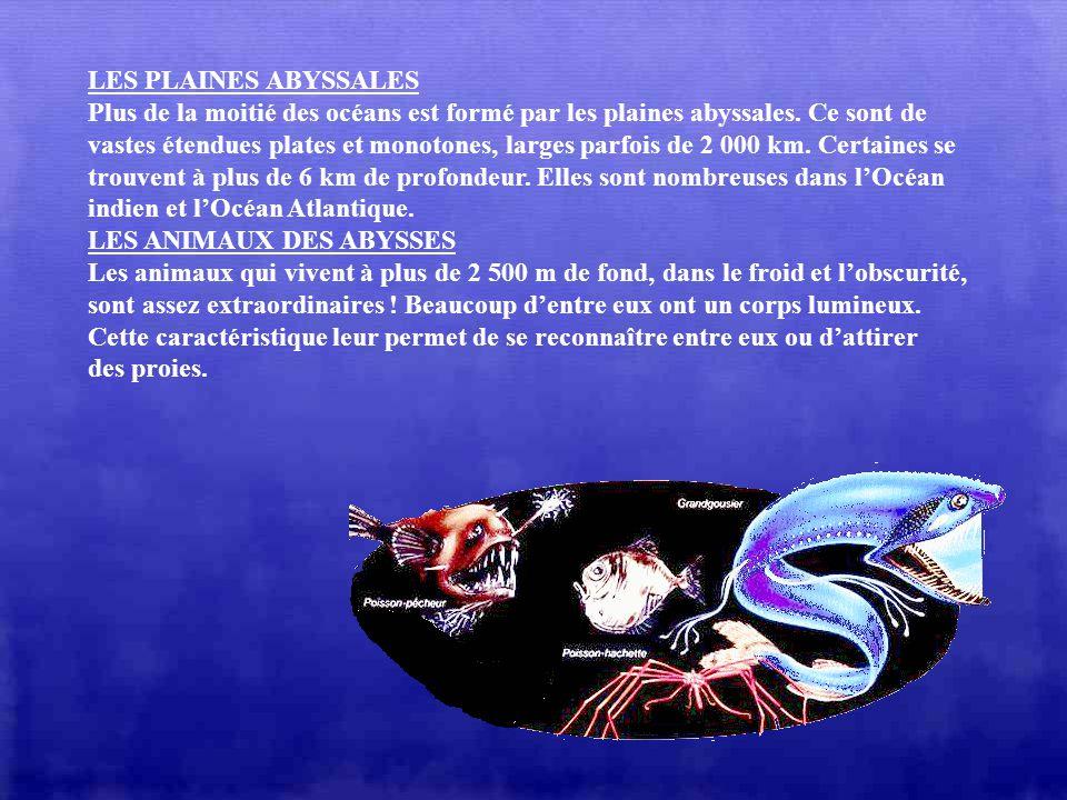 LA VIE DANS LES FONDS MARINS : Cest entre 0 et 200 m de fond que vivent les espèces animales et végétales les plus variées : algues, vers, crustacés,