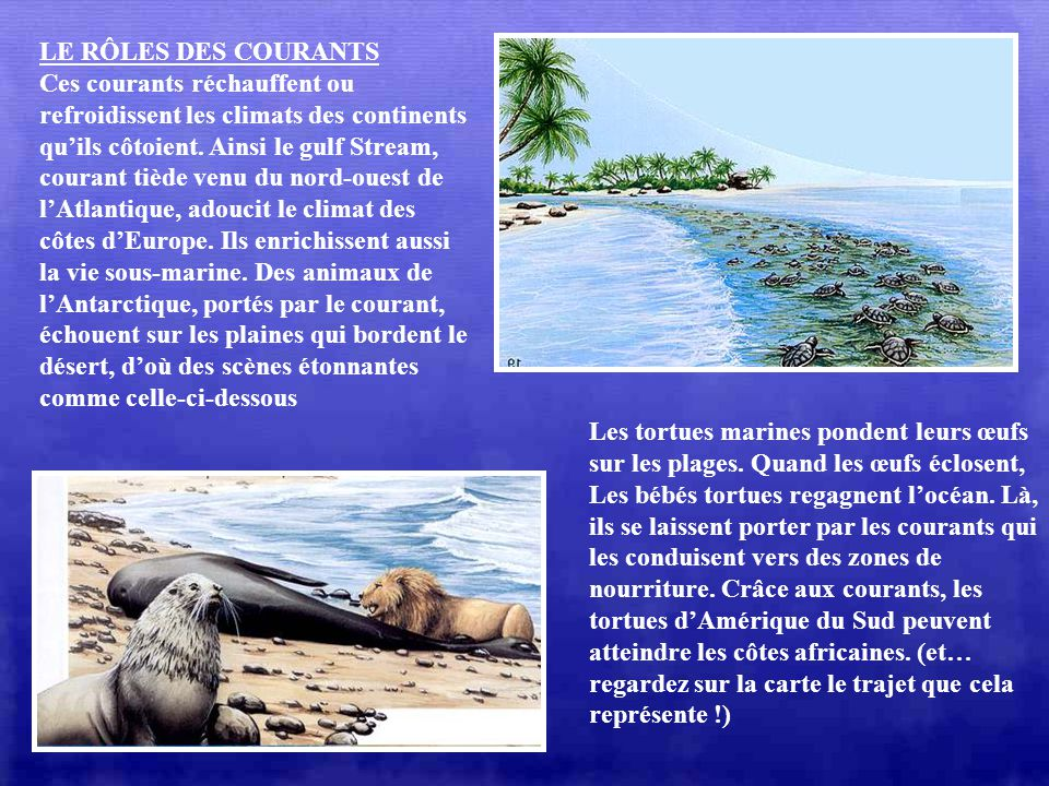 LES COURANTS Les courants sont comme de larges fleuves qui circulent dans les océans, à la surface ou en profondeur. Les vents qui soufflent sur les o