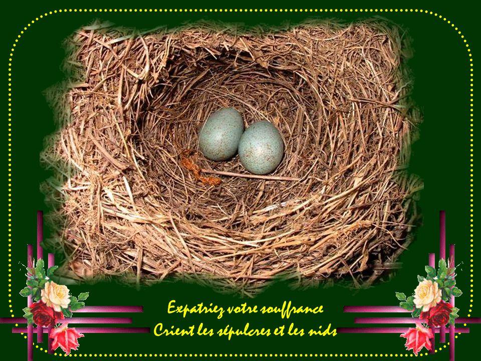 Expatriez votre souffrance Crient les sépulcres et les nids