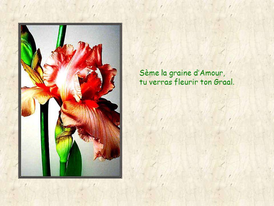 Sème la graine dAmour, elle va polliniser les autres fleurs, et les mauvaises herbes seront vaincues.
