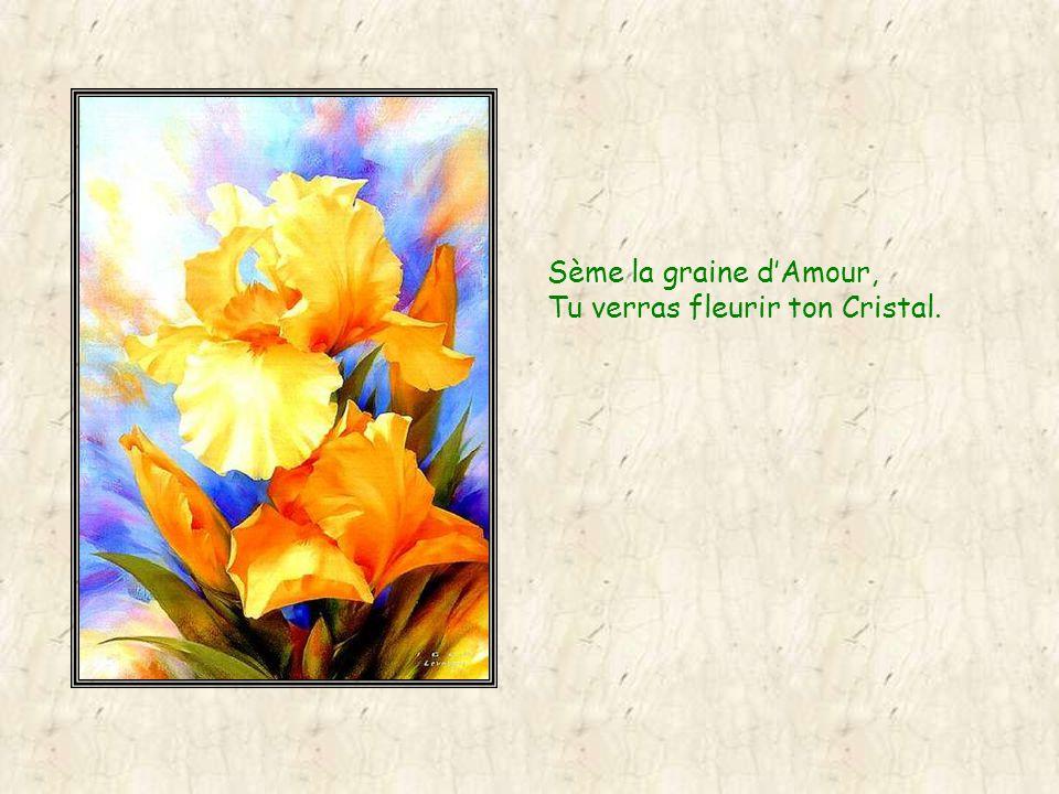 Sème la graine dAmour, tu verras fleurir ton Graal.