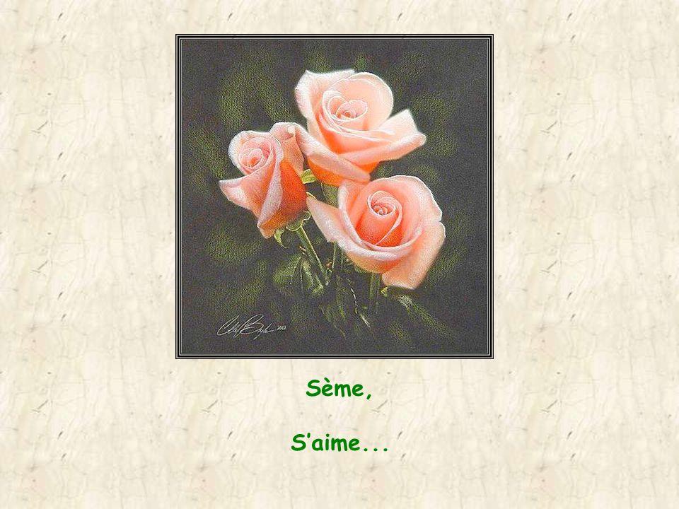 Sème la graine dAmour, Tu seras source deau vive où les âmes viendront se reposer !!!