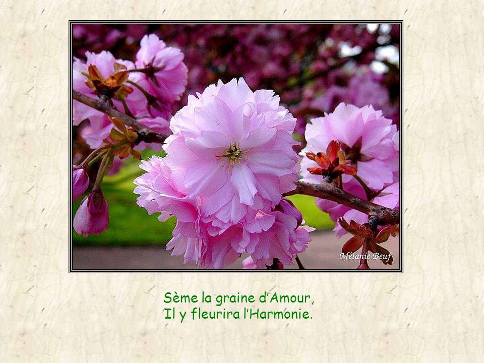 Sème la graine dAmour, Il y fleurira lHarmonie.