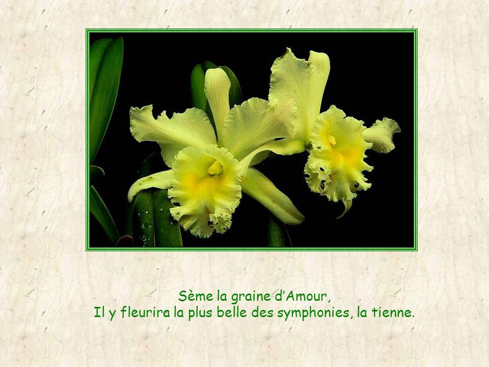 Sème la graine dAmour, Il y fleurira la plus belle des symphonies, la tienne.
