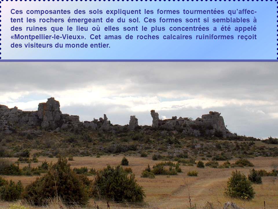 Le Larzac est un vaste plateau de calcaire datant de l'ère jurassique approximativement nivelé par l'érosion et séparé des autres causses par des rivi