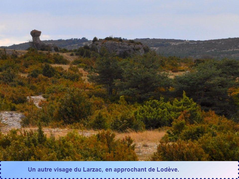 Le Larzac peut avoir beaucoup de visages… Cest aussi le lieu délevage des moutons vous offrant le fromage de Roquefort…