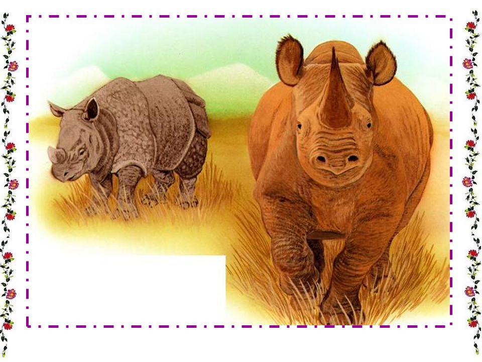 Où naît le petit hippopotame .