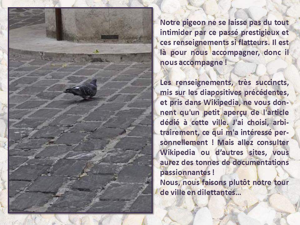 Notre pigeon ne se laisse pas du tout intimider par ce passé prestigieux et ces renseignements si flatteurs.